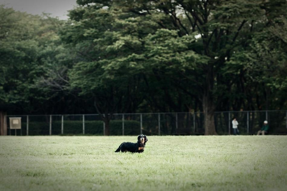 Public-Park-DSC 6705-martosc-s